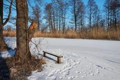 La beauté de l'hiver image stock