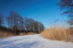 La beauté de l'hiver photos libres de droits