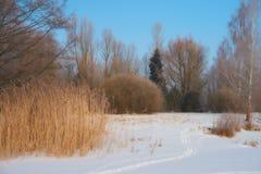 La beauté de l'hiver photo stock