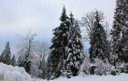 La beauté de l'hiver photographie stock libre de droits