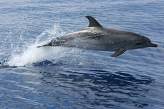 La beauté de l'océan Photo libre de droits