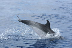 La beauté de l'océan Photographie stock