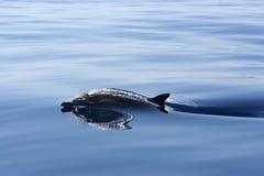 La beauté de l'océan Images libres de droits