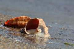 La beauté de la mer Photos stock
