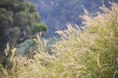 La beauté de la nature Image stock