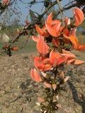 La beauté de la nature, fleurs remplit couleur en nature Image stock
