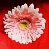 La beauté de la nature, symbole Photo libre de droits