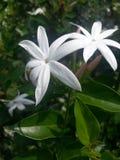 La beauté de la nature est un trésor merveilleux c'est merveille de nature Images libres de droits