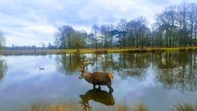 La beauté de la nature photographie stock