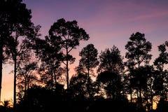 La beauté de la nature pendant les vacances Images libres de droits