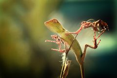 La beauté de sommeil de lézards photos libres de droits