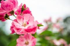 La beauté des fleurs dans le jardin Photo libre de droits