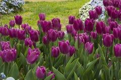 La beauté des fleurs de ressort Image libre de droits