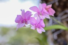 La beauté des fleurs naturelles photo stock