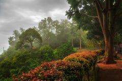 La beauté du brouillard Image libre de droits