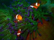 La beauté du monde sous-marin image libre de droits