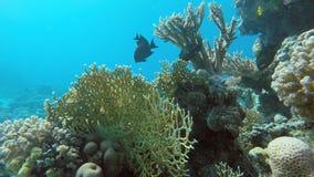 La beauté du monde sous-marin banque de vidéos