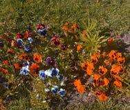 La beauté florear de la nature du Portugal photographie stock libre de droits