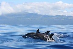 La beauté de l'océan Photos stock