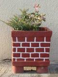 La beaux envergure et cactus variés fleurissent dans le pot de fleur fait main photo stock