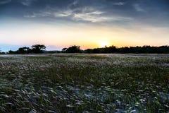 La bella alba e ricopre di paglia alla spiaggia di aru di Tanjung, Labuan malaysia Fotografia Stock