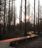 La bella alba in foresta fotografie stock