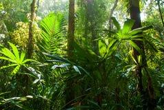 La bella alba splende giù sulla foresta della palude della torba alla palude Forest Nature Research della torba di Sirindhorn ed  fotografie stock libere da diritti