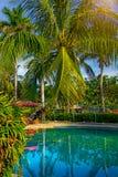 La bella, alta palma davanti alla piscina, Palma è riflessa nel bacino dell'acqua Immagine Stock Libera da Diritti