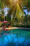 La bella, alta palma davanti alla piscina, Palma è riflessa nel bacino dell'acqua Fotografia Stock