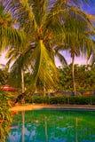 La bella, alta palma davanti alla piscina, Palma è riflessa nel bacino dell'acqua Fotografie Stock