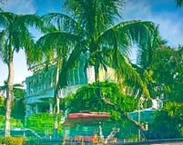 La bella, alta palma davanti alla piscina, Palma è riflessa nel bacino dell'acqua Fotografie Stock Libere da Diritti