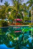 La bella, alta palma davanti alla piscina, Palma è riflessa nel bacino dell'acqua Immagine Stock