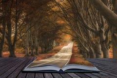 La bella alternativa surreale ha colorato il paesaggio della foresta Fotografie Stock