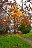 La bella caduta colora la natura Fotografia Stock
