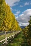 La bella caduta ha colorato gli alberi Fotografia Stock Libera da Diritti