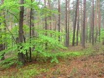 La bella cascata in foresta immagini stock libere da diritti