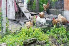 La bella contea di Maramures della Romania Immagine Stock Libera da Diritti