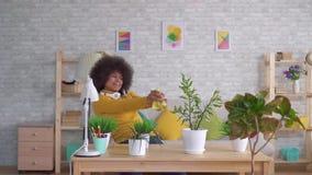 La bella donna afroamericana positiva ballante espressiva con un'acconciatura di afro prende la cura dei fiori e delle piante den stock footage