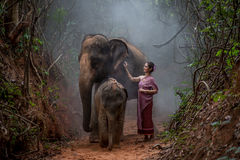 La bella donna asiatica porta il vestito tailandese con il suo elefante, elepha Fotografia Stock
