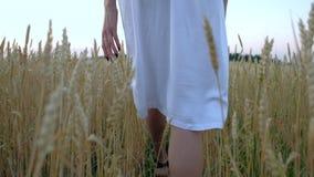 La bella donna va al campo di grano dorato maturo video d archivio