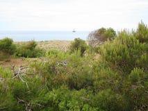La bella erba verde è in un'oasi Fotografia Stock Libera da Diritti