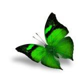 La bella farfalla di verde di volo su fondo bianco Fotografia Stock Libera da Diritti