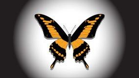 La bella farfalla nel riflettore, compare ed infiamma nei colori differenti video d archivio