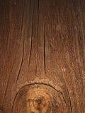 La bella fattura di un albero Immagini Stock
