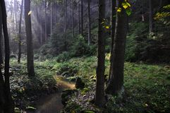 La bella foresta illuminata con la corrente di favola fotografia stock