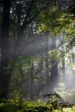 La bella foresta verde in pieno degli alberi fiorisce l'estate degli animali degli insetti delle piante in primavera nell'inverno Immagini Stock Libere da Diritti