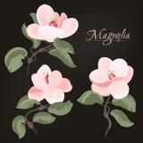 La bella, illustrazione piana di stile della magnolia fiorisce Immagine Stock