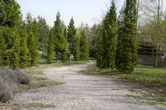 La bella luce di mattina in parco pubblico con il campo di erba verde Il parco verde con una vista dei cespugli verdi Immagine Stock