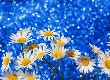 La bella margherita bianca tenera fiorisce in un mazzo astuto un brilli Immagine Stock