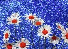 La bella margherita bianca tenera fiorisce una festa brillante b blu Fotografie Stock